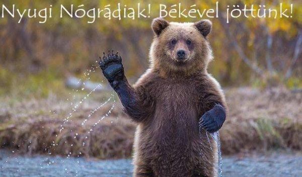 A nógrádi medvéknek már Facebook oldaluk is van. Ebből nem lesz téli alvás...