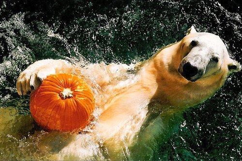Vigyázz, nyomulnak a nógrádi medvék!