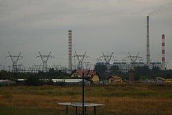 Nowe Czarnowo fenyőerdő