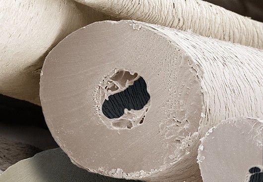 jegesmedve szőr mikroszkóp alatt