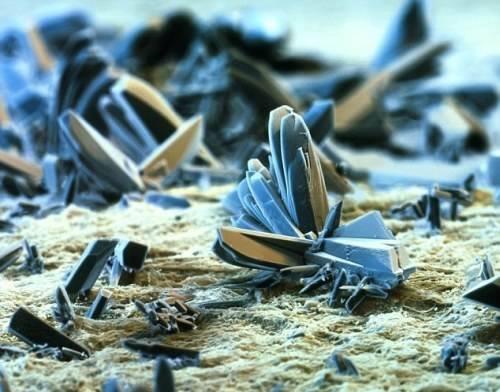 cigaretta mikroszkóp alatt